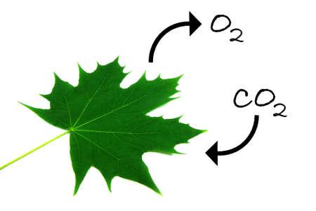 Ilustración del proceso natural de la fotosíntesis.
