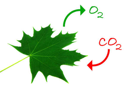 Ilustración del proceso natural de la fotosíntesis. Foto de archivo