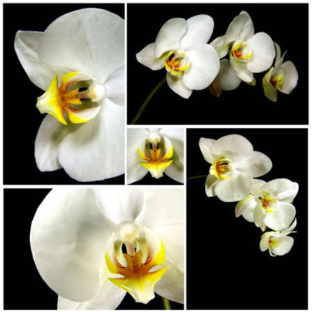 Photos of orchids assembled into one image to make a mosaic.