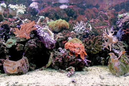 Beautiful coral reef in background sea aquarium photo