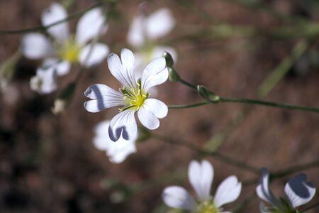 정원에 근접 흰 꽃입니다.