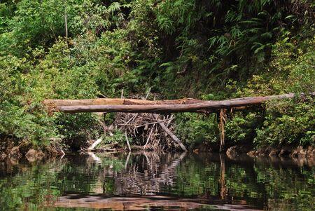 Natural bridge along the river in Taman Negara, Malaysia