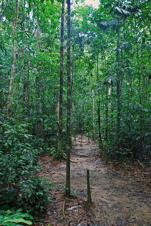 Taman Negara in Malaysia photo