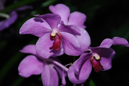Close-up of a purple orchid