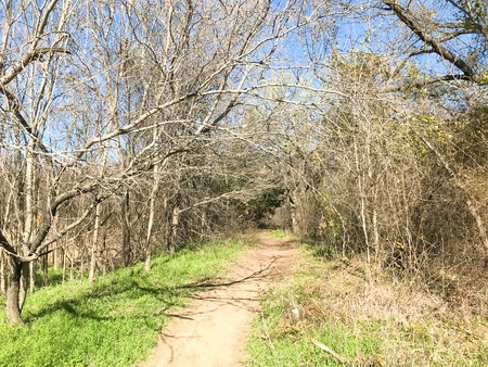 Soil trail at nature park with bare trees in wintertime Stock Photo