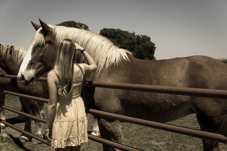 Blonde woman taking photo with Holland draft horse at local farm in Texas, USA