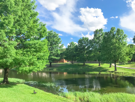 Neighborhood pond with water fountain and ducks. Beautiful lake house near row of matured tree, green grass lawn and cloud blue sky
