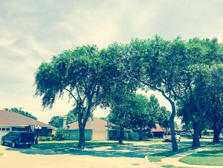 Quite neighborhood with tall trees canopy, pathway and single family houses lined up