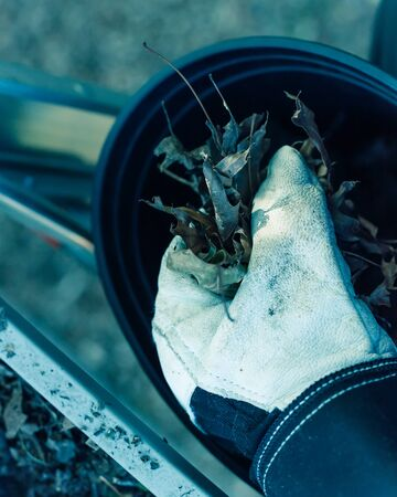 Vintage tone top view man hand in gloves holding dried leaves and dirt from gutter and drop into black bucket. Roof gutter cleaning in summer time