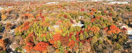 Panorama aerial view suburb Dallas in fall season fall foliage, bright orange color. Residential houses covered by lush tree canopy colorful autumn leaves, park with trail, pathway and power line