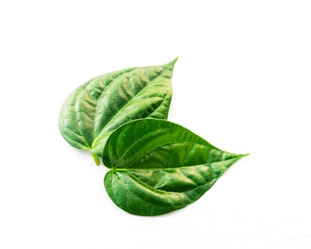 Top view studio shot two Vietnamese betel leaves paan or scientific name is Piper betle isolated on white background. A vine belonging to the Piperaceae family, mostly consumed chewing in Asia