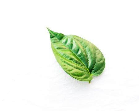 Studio shot top view one Vietnamese betel leaf paan or scientific name is Piper betle isolated on white background. A vine belonging to the Piperaceae family, mostly consumed chewing in Asia Stock fotó