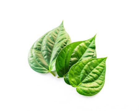 Close-up studio shot three Vietnamese betel leaves paan or scientific name is Piper betle isolated on white background. A vine belonging to the Piperaceae family, mostly consumed chewing in Asia Stock fotó