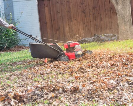 Side view a senior Asian gentlemen pushing gasoline lawn mower with black catch bag to mulch autumn leaves at front yard. Lawn care and backyard clean up in fall season in Texas, America