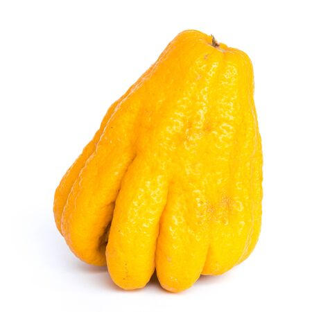 One ripe Buddha hand fruit or Hand of Buddha, Fingered citron fruit, Citrus medica isolated on white background. Afragrant citron variety whose fruit is segmented into finger-like sections