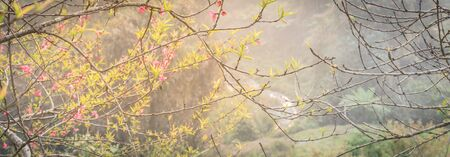 Panorama beautiful valley and mountain view with peach flower blossom in rural North Vietnam. This is ornament trees for Vietnamese Lunar New Year Tet in springtime.