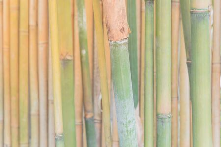Selective focus green bamboo stalks in nature in Singapore forest