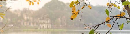 Panorama view yellow leaves of freshwater mangrove tree Loc Vung, or barringtonia acutangula at springtime in Hoan Kiem Lake Sword Lake , Hanoi. Defocused view of Turtle Tortoise Tower