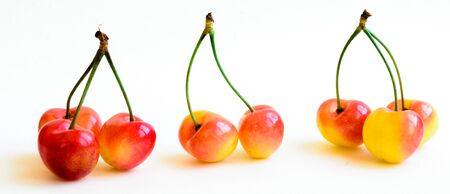 A row of three groups Rainer cherries joined stem isolated on white background. Fresh picked organic cherries grown in Yakima Valley, Washington State, USA.