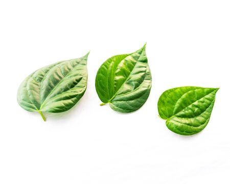Close-up studio shot three Vietnamese betel leaves paan or scientific name is Piper betle isolated on white background. A vine belonging to the Piperaceae family, mostly consumed chewing in Asia Imagens