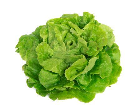 Organic homegrown Tom Thumb sałata na białym tle. Rozmiar piłki tenisowej, jasnozielona sałata ze zwartymi główkami, pogniecione liście. Odmiana azjatycka Zdjęcie Seryjne