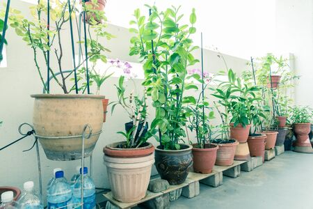 Row of home grown flowers, vegetable and herbs pots over balcony of public housing (HDB) flats in Singapore. Growing plants in sharing apartment patio space is very popular in Asian countries Stockfoto