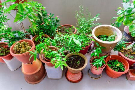 Row of home grown flowers, vegetable and herbs pots over balcony of public housing (HDB) flats in Singapore. Growing plants in sharing apartment patio space is very popular in Asian countries Reklamní fotografie