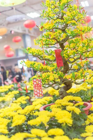 Row of bright yellow mum pots and artificial yellow apricot bonsai tree with lucky money envelops at Vietnamese market in Texas, US. Tradition spring flower ornament for Tet Lunar New Year festival