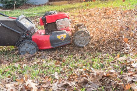 Top view of working lawn mower mulching autumn leaves. Lawn care and backyard clean up in fall season in Texas, America