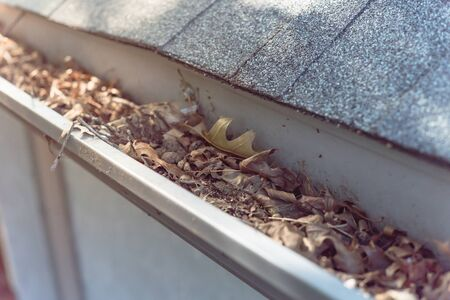Top view close-up gutter of residential house full of dried leaves and dirty need to clean-up. Gutter cleaning and home maintenance concept
