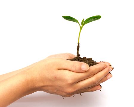 Woman hands holding seedling with soil isolated on white background. Young plant green spout for growing, development, protection and nurture concept