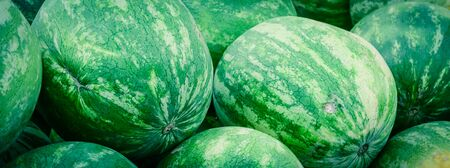 Panorama view group of fresh organically grown watermelons in the farmer market at Puyallup, Washington, USA. A close up full l frame of whole summer fruits.
