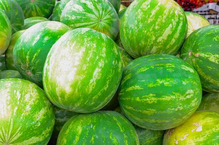 Group of fresh organically grown watermelons in the farmer market at Puyallup, Washington, USA. A close up full l frame of whole summer fruits. Imagens