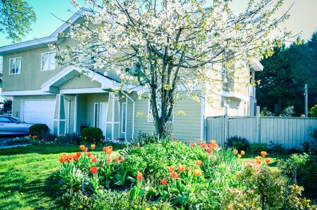 Typical two story house in suburbs Vancouver BC, Canada in spring with blooming cherry and tulips flower. Cherry blossom in front yard entrance of single family home with attached garage