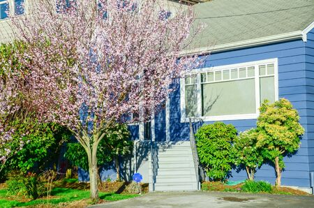 Front entrance railing of blue siding house near blossom cherry tree in Seattle, Washington, America. Blooming flower at front yard of single family home in suburban residential neighborhood