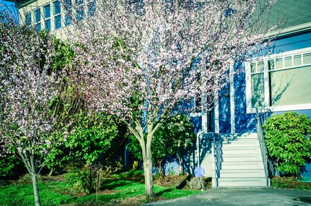 Entrance to blue house with blooming pink cherry flower in suburban Seattle Banco de Imagens
