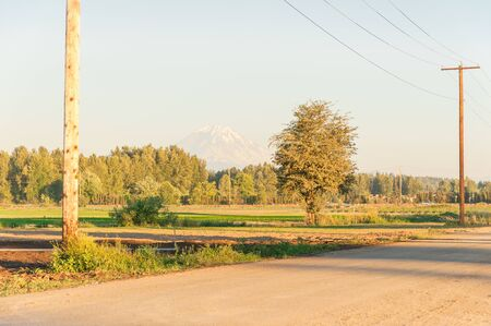 Farmland in Kent, Washington, America with snowcapped Mt. Rainier in the distance background. Row of matured tree and wooden power pole and small town in horizontal with warm sunset light Foto de archivo