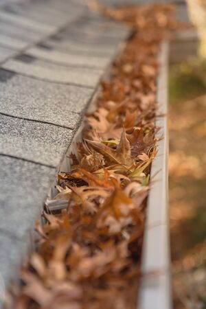 Clogged gutter near roof shingles of residential house full of dried leaves and dirty need to clean-up. Blocked drain pipe on rooftop. Gutter cleaning and home maintenance concept Banque d'images