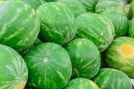 Group of fresh organically grown watermelons in the farmer market at Puyallup, Washington, USA. A close up full l frame of whole summer fruits.