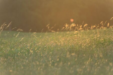 Green grass flower close-up with warm sunset light. Rural scene of farming field in suburban Houston, Texas, America. Stock Photo