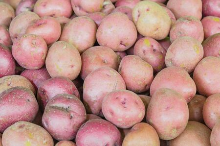 Red potatoes full frame view at farmer market in Washington, America. Organic tuber crops background.