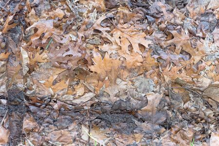 Stack of compacted dried leaves in a leaf pile close-up. Mulch leaves composting process with organic matter, microorganisms and soil fertilizer. Urban farming agriculture concept in Texas, USA