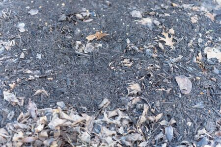 Top view of homemade rich and dark soil decomposed from leaves compost. Composting process with organic matter, microorganisms and fertilizer. Stock Photo