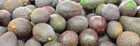 Panorama view pile of ripe and unripe avocados at farmer market in Puyallup, Washington, America. Close up full frame of fresh picked and organic avocados.