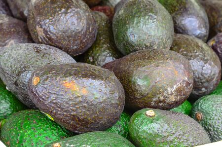 Pile of ripe and unripe avocados at farmer market in Puyallup, Washington, America. Close up full frame view of fresh picked avocados.
