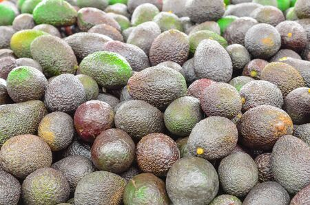 Organically grown mini avocados in the farmer market in Puyallup, Washington, America. Close up full frame view of ripe and green avocados. 版權商用圖片