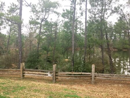 Lakeside trail with rustic fence logs and tall pine trees from rest area in Texas, USA