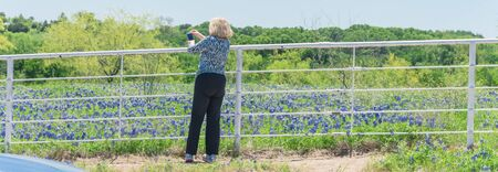 Panoramic senior Caucasian lady taking photo mobile phone of blossom bluebonnet field over fence Stock Photo