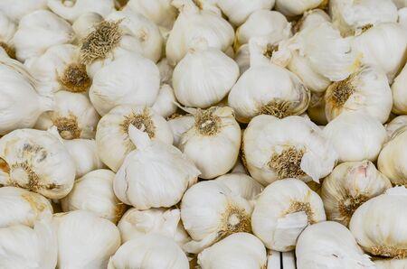 Pile of jumbo garlic (elephant garlic) at farmer market in Washington, America. Full frame view organic bulbs heap on display.