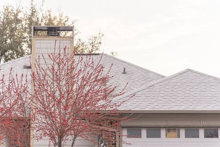 Bright red winter berry near chimney with frost on black shingle roof of residential house near Dallas, Texas, America. Light frosted roof surrounded by trees